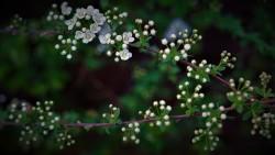 spring-awakening-4946533_960_720